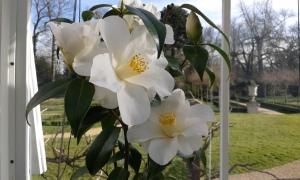 Paxton Chiswick Camellia & Italian Garden